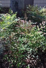 17 best nontoxic house plants images on pinterest houseplants