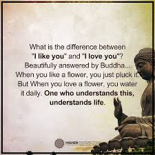 Flower And Love Quotes - best 20 buddha quotes love ideas on pinterest buddha quotes