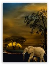 apple wallpaper elephant wildlife wallpaper gorgeous on all levels foreground