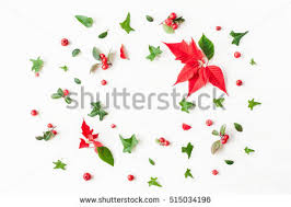 christmas plants christmas plants stock images royalty free images vectors
