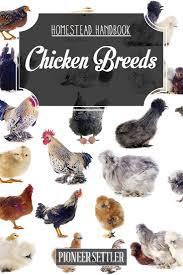 chicken breeds list with raising backyard chickens chicken coop