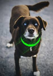 Light Up Dog Collar What Are The Best Led Light Up Dog Collars Doggytoggery