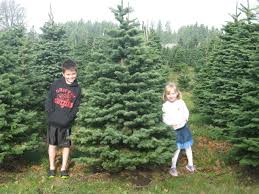 9 christmas u cut tree farms a family tradition around thurston