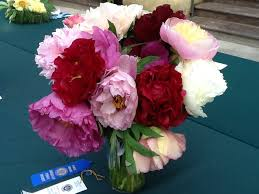 peonies flowers cut flower care