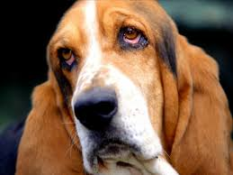 hd animals wallpapers best dogs wallpapers pictures