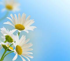 community non profit u0026 business nunan florist u0026 greenhouses