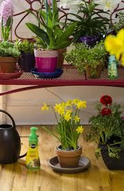 103 best make your world green images on pinterest plants