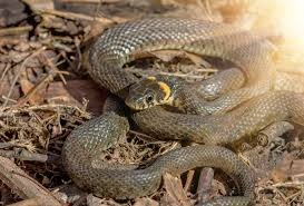 how to keep snakes out of your yard shumaker animal control