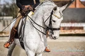 inês guerreiro pre exacto u0026 u0027baroque horse horse of kings