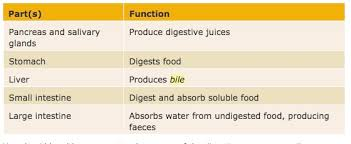 bill nye digestion worksheet the best and most comprehensive