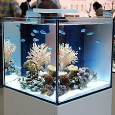 Aquascape Reef Best 25 Reef Aquascaping Ideas On Pinterest Nano Reef Tank
