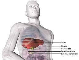 leberschwäche symptome leberkrebs leberzellkrebs leberzellkarzinom hepatozelluläres