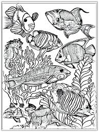 sea shells coloring pages fish color free realistic sheets