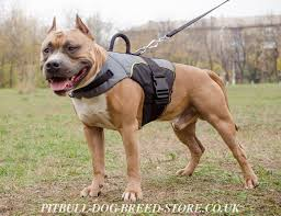 american pitbull terrier in uk dog harness vest for pitbull warming u0026 support
