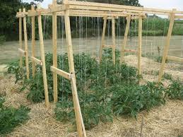 Garden Netting Trellis Tomato Trellis Gives You Four Benefits To Your Tomato Plants