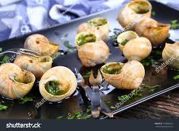 cuisiner les escargots de bourgogne cuisine escargots de bourgogne snails stock photo 716804554