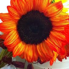 Wholesale Flowers Philadelphia - travis wholesale florists 20 photos u0026 18 reviews florists