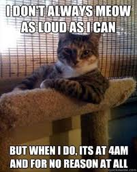 Silly Cat Memes - call funniest cat memes of all time