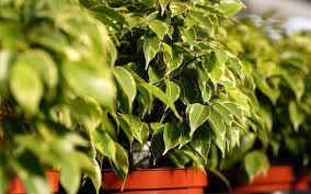 the best houseplants to clean the air in your home as recommended