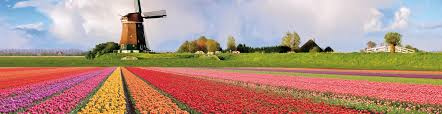 Tulip Festival Map It U0027s Tulip Time In The Netherlands Here U0027s How To Avoid The Crowds