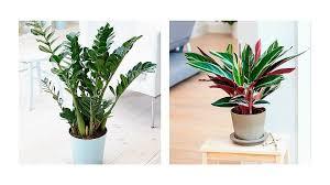 plants that grow in dark rooms 7 low key houseplants that ll survive in dark rooms grazia