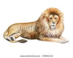 lion print stock images royalty free images u0026 vectors shutterstock