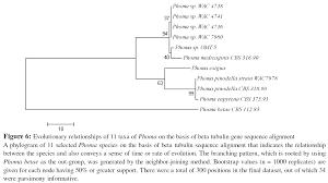 Home Evolutionary Healthcare An U003cem U003ein Silico U003c Em U003e Molecular Evolutionary Analysis Of Selected
