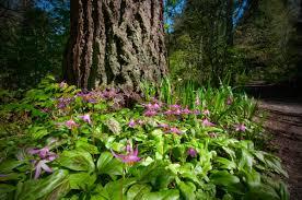 northwest native plants garden ideas about the garden pertaining to garden plants