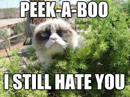 I Hate You Meme - but i still love you grumpy cat peekaboo i still hate you