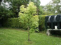 trees rathregan scoilnet ie