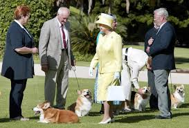 The Queens Corgis The Queen Adopts Another Corgi After Promising Not To Get Any