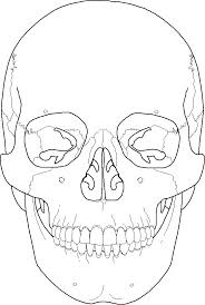 Human Anatomy Skull Bones Skeletal Notes