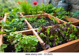 square foot gardening by planting flowers herbs and vegetables in
