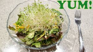 salad from indoor hydro garden to bowl youtube
