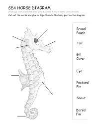 seahorse sea horse run