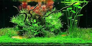 Aquascape Tank Understanding Taiwanese Aquascaping Style The Aquarium Guide