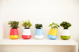 small low light plants 10 low light houseplants to brighten your tiny apartment