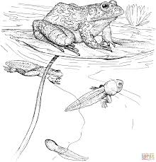toad coloring pages fred the red frog eats flies coloring page