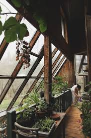 Interior Garden Plants by Best 25 Indoor Greenhouse Ideas Only On Pinterest Indoor Herbs