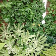 Climbing Plants For North Facing Walls - plants for shade