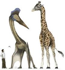humans killed australia u0027s giant beasts u0027