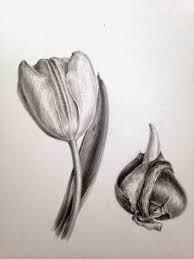dianne sutherland day 6 tulip in graphite