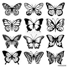 image result for butterfly vectors pattern