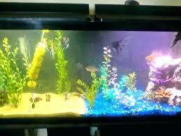 aquarium decoration ideas freshwater pictures of fish tanks decorated ghanko com
