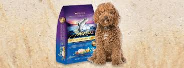 4 best foods to feed your and puppy labradoodle