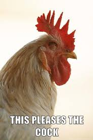 Rooster Meme - this rooster is happy too this pleases x know your meme