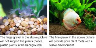 Best Substrate For Aquascaping Freshwater Aquarium Gravel What You Should Know Home Aquaria