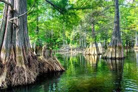 6 tips for fishing docks trees and more wood cover