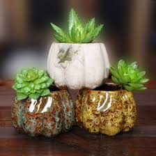 Small Desk Plants by Small Container Plants Online Small Container Plants For Sale