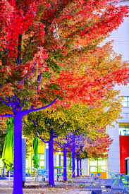 konstantin dimopoulos paints blue trees to help cities go green